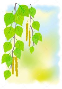 Мажорные и минорные белки пыльцы березы