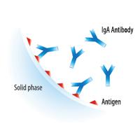 Какие анализы можно сдать методом ImmunoCAP