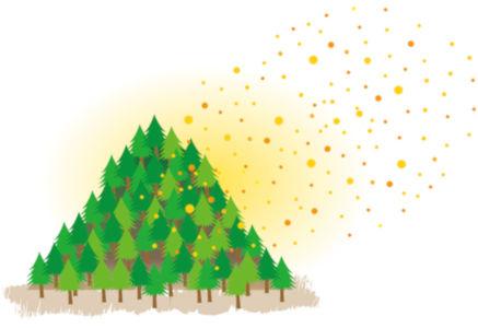 пыльца деревьев