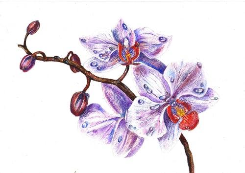 аллергия на орхидеи